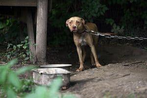 0420-dog-fighting-animal-cruelty-supreme-court_full_600