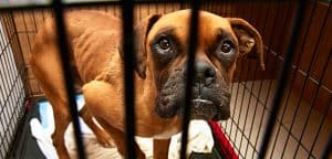 how-you-can-help_report-animal-cruelty_main-image_0